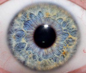 iris of the eye for Iridology